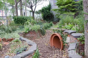 Backyard-Garden-17